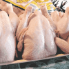 Bisnis Ayam Potong Sukses dengan Mesin Maksindo