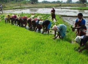 Pengertian Pertanian Lengkap