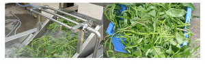 Air Bubble Vegetable Washer3