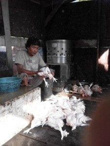 IMG_6897-1-A-225x300 ayam potong tokomesin