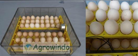 mesin penetas telur garansi