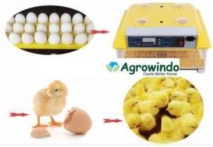 mesin penetas telur kapasitas 48 butir