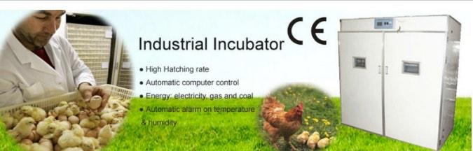 tetas-telur-industri-murah-bagus