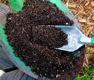 Cara Praktis dalam Membuat Pupuk Kompos dari Sampah Organik